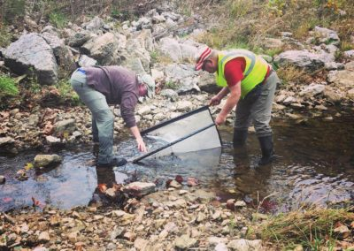 Dardenne Creek Monitoring: Volunteers Monitoring the Creek